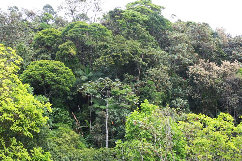 biodiversity rainforest - photo #4